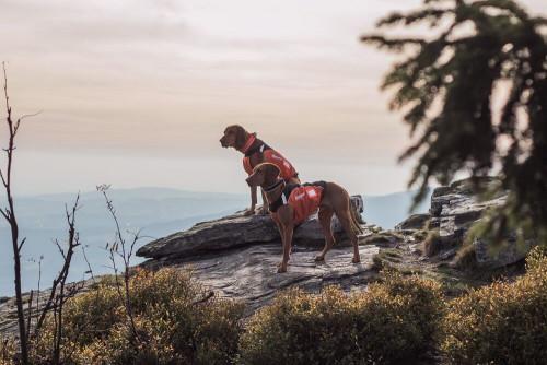Non-Stop Dogwear Hunting Cover Orange/Black