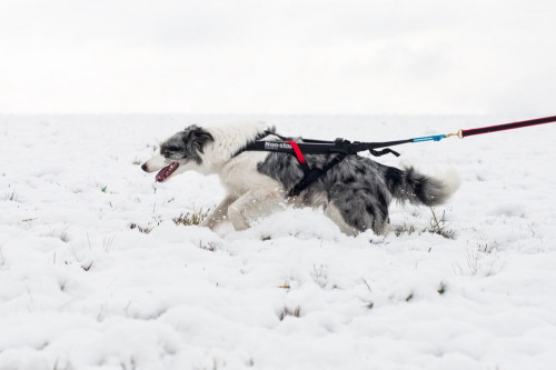 Non-Stop Dogwear Freemotion Harness Black