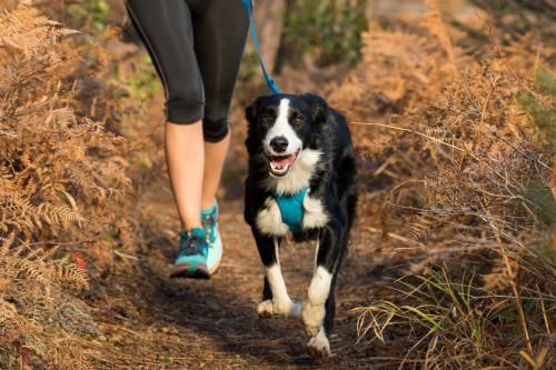 Ruffwear Front Range ™ Hundebånd Tillandsia Purple