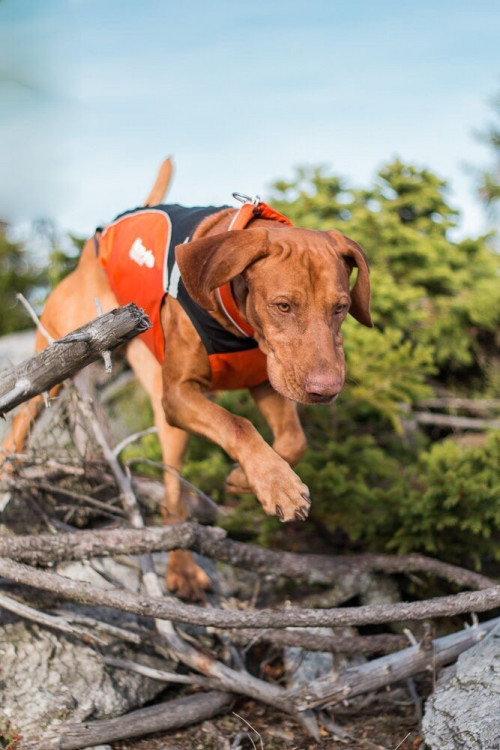 Non-Stop Dogwear Hunting Cover Orange/Black