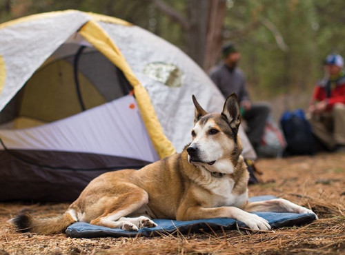 Ruffwear Mt Bachelor Pad Overcast Blue Medium
