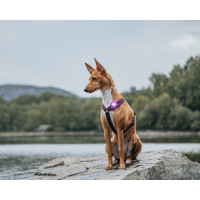 Orbiloc Dog Dual Lilla