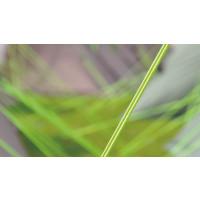 Outwell Vigor 5 Green